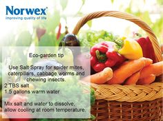 www.facebook.com/norwex post Eco-garden tip. Use Salt Spray for spider mites, caterpillars, cabbage worms and chewing insects. 2 TBS salt 1.5 gallons warm water Mix salt and water to dissolve, allow cooling at room temperature.