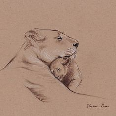 """A Mother's Pride"" Lioness and cub original pencil drawing."