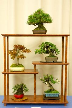 Shohin bonsai.. very nice display of nature and man's art.
