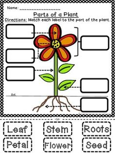 math worksheet : students label the parts of a flower with this free cut and paste  : Parts Of A Plant Worksheet Kindergarten
