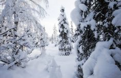 Winter Camping: Getting Started. Winter camping requires extra planning and gear. But it's well worth the effort. Cold Weather Camping, Winter Camping, Kayak Camping, Camping Hacks, Winter Solstice Poems, Camping In Pennsylvania, First Day Of Winter, Very Scary, Hiking Tips