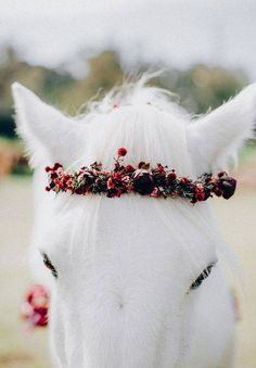 red wedding ideas horse with red flower crown Cute Horses, Pretty Horses, Beautiful Horses, Cavalo Wallpaper, Foto Cowgirl, Horse Meme, Horse Horse, The Fox And The Hound, Black Wedding Dresses