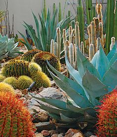 Southwest Garden Inspiration: Steve Martino The red yucca, brittlebush, and prickly pear at a Palm Springs, California, home