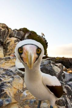 Greetings from the Galapagos!
