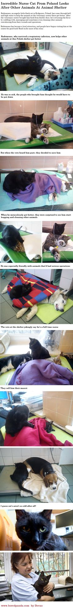 Incredible Nurse Cat From Poland Looks After Other Animals At Animal Shelter. http://www.boredpanda.com/veterinary-nurse-cat-hugs-shelter-animals-radamenes-bydgoszcz-poland/?afterlogin=savevote&post=194920&score=1