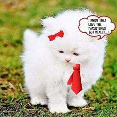 Parlocat Animal Pictures, Cats, Animals, Gatos, Animales, Animaux, Pet Pictures, Animal, Cat