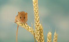 nibbles by Mark Bridger - Photo 104114751 - 500px
