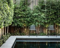 Best Artificial Bamboo Plants (perfect for outdoor privacy screens!) | Posh Pennies Fargesia, Moderne Pools, Privacy Plants, Privacy Screens, Privacy Fences, Fencing, Pool Plants, Yard Privacy, Outdoor Blinds