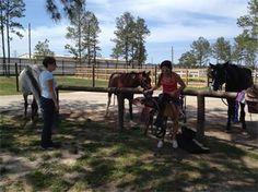 Willow Creek Ranch of Tomball - HORSEBACK RIDING LESSONS - Tomball, TX