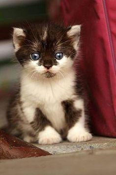 So cute.... - Jenny Ioveva - Google+