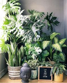 are the plants that purify the air An expert weighs in on how to bring functional detox plants into your home, and the best ways *not* to kill them.An expert weighs in on how to bring functional detox plants into your home, and the best ways *not* to kill Plantas Indoor, Decoration Plante, House Plants Decor, Plants In The House, Living Room Plants Decor, Diy Plant Stand, Plant Stands, Deco Floral, Interior Plants