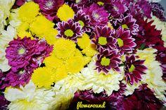 Mix of #chrysanthemums