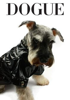 Bad to the bone! #dogfashion #style #DOGUELookBook