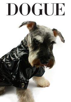Bad to the bone! #dogfashion #style #DOGUELookBook