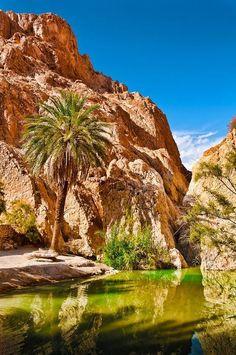 Chebika Oasis. (Tunisia -Sahara desert.: