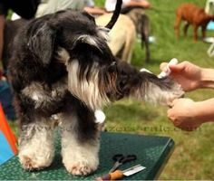 How to Brush a Dog