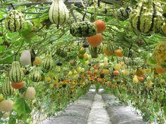 Hanging Garden of Food