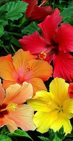 tropical flowers....