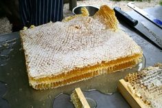 How to harvest honey from natural comb - SO MANY benefits to natural beekeeping on a small scale