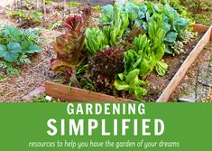 Does gardening ever seem complicated to you? Sometimes I get so bogged down in information overload that I forget that gardening is fun. In this gardening bundle you'll receive. The Gardening Notebook – Starter Garden, Container Herb Garden, Succession Planting, Easy Plants To Grow, Information Overload, Gardening Zones, Garden Markers, Save Money On Groceries, Seeds