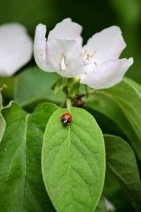insects Ladybugs, Spiders, Butterflies, Insects, Plant Leaves, Places, Board, Flowers, Beautiful