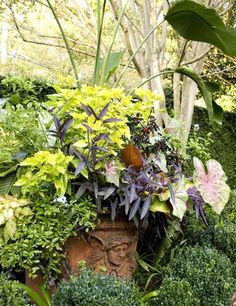 A colorful array of tropical foliage plants spills out of vintage terra-cotta urns - Traditional Home® / Photo: Erica Dines