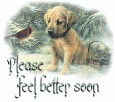 Animated Gif by JoanBlalock Get Well Soon Images, Get Well Soon Funny, Get Well Soon Messages, Get Well Soon Quotes, Get Well Wishes, Get Well Soon Gifts, Get Well Cards, Cute Dogs And Puppies, I Love Dogs