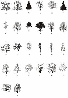 Read the Tree Leaves, With an Artist's Invented Tree Font - Atlas Obscura