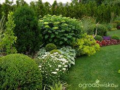 Ogród mały, ale pojemny;) - strona 83 - Forum ogrodnicze - Ogrodowisko