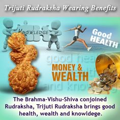 Trijuti rudraksha wearing benefits the brahma-vishnu-shiva conjoined rudraksha, Trijuti Rudraksha brings good health, wealth and knowldege.