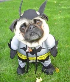 @Kjerstin Anderson , @Rae Retter : will brinkley & dexter be dressing up for halloween??
