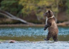 Tip Toe through the Fish Photo by Pat Roque -- National Geographic Your Shot