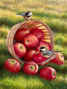 ZOOYA Diamond Embroidery DIY Diamond Painting Birds and Apple Fruit Diamond Painting Cross Stitch Rhinestone Decoration Cross Paintings, Original Paintings, Nature Paintings, Art Paintings, Diamond Drawing, Wildlife Art, Beautiful Paintings, Bird Art, Animal Drawings