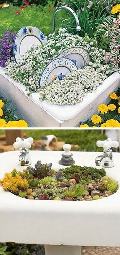 sink filled with soil with plates on sides, planted with white alyssum to look like soap suds