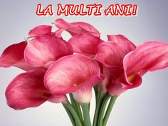 Post includes calla lily flowers 12 important facts, 25 pictures and usage of Calla Lily. Unique article for Calla Lily flowers facts, pictures and wallpapers. Pictures Of Calla Lilies, Lily Pictures, Calla Lily Flowers, Calla Lillies, Pink Flowers, Flowers Pics, Pink Orchids, Fresh Flowers, Red Roses
