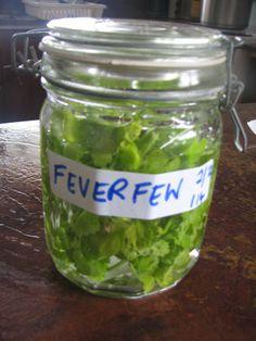 Feverfew herbal tincture via Quarter Acre Lifestyle