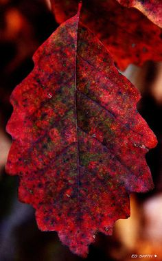 Fall is here. Credit: Ed Smith, Fine Art America
