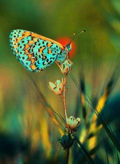 https://www.facebook.com/vlinder1111/photos/a.280237218746316.46484.280228358747202/531904810246221/?type=1