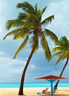 Beach Palm Tree Caribbean Vacation Destination Tropical Travel Antigua St. Martin St Kitts St. Lucia Grenada Barbados Amazing Getting Away from it All | Flickr - Photo Sharing!