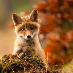 A baby Fox!!!!!!