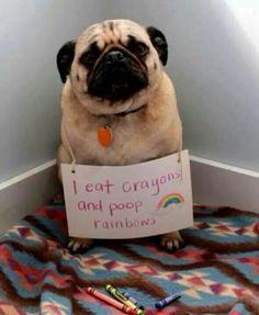 I eat crayons and poop rainbows
