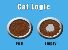 #Cat #Logic #Full vs #Empty #LetsGetWordy