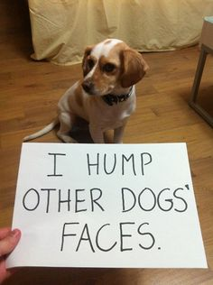 Dog Shaming features the most hilarious, most shameful, and never-before-seen doggie misdeeds. Join us by sharing in the shaming and laughing as Dog Shaming reminds us that unconditional love goes both ways. Dog Shaming Pictures, Funny Dog Photos, Funny Dog Videos, Funny Pictures, Dog Quotes Funny, Funny Animal Memes, Funny Dogs, Funny Animals, Animal Humor