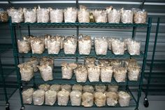 1410 gabe's mushrooms - 07