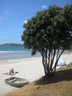 The Year Of My Life: Travelling Aotearoa New Zealand. Kugel, Auckland, Of My Life, New Zealand, Beach, Water, Plants, Blog, Travel