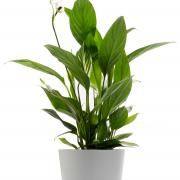 Plantas interiores para combatir la humedad 4