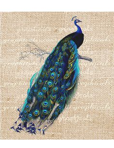 Vintage teal peacock print Digital download graphic image for Iron on fabric transfer burlap decoupage pillows tote bags No. 498. $1.00, via Etsy.