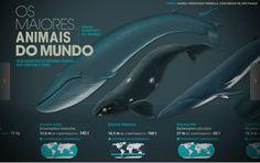Os maiores animais do mundo
