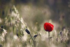 Un amante pare reinventarse http://www.baobabcoaching.es/un-amante-para-reinventarse/ #post #baobabcoaching