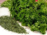 There are more than 30 varieties of parley, but the most common are curly-leaf and the more pungent Italian or flat-leaf parsley. The flat-leaf has more flavor than curly parsley and is preferred for cooking, while dried parsley has little flavor at all. In ancient times parsley wreaths were used to ward off drunkenness. Chewing parsley will help with bad breath from food odors such as garlic.